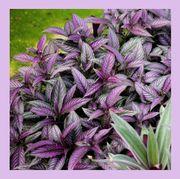 Flower, Flowering plant, Plant, Petal, Purple, Melastome family, Rhododendron, Wildflower, Violet family, Perennial plant,