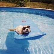 signs your dog is overheating