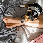 dog lying on bed with owner