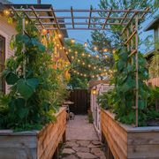 garden with string lights
