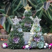 succulent christmas trees with stars and succulent christmas tree in rustic pot