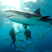 places where you can swim with sharks