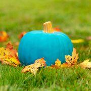 teal pumpkin outside