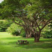 Tropical Garden with Picnic Benches
