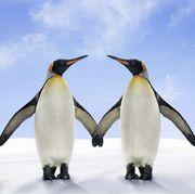 Two penguin soulmates