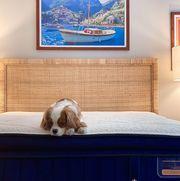 stearns  foster mattress review