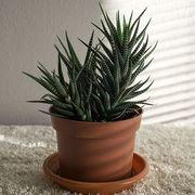 Flowerpot, Houseplant, Plant, Flower, Terrestrial plant, Botany, Aloe, Rosemary, Agave, Succulent plant,