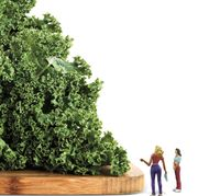 Green, Tree, Vegetation, Shrub, Plant, Woody plant, Botany, Grass, Landscape, Leisure,