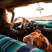 woman and english bulldog inside vintage car