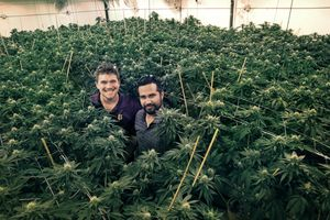 Co-founders CEO Eric Battuello (left) and Cristian Ramos (right) at Butterbrand Farms where the crop is about a month before harvest on Friday, August 18, 2017, in San Francisco, Calif.