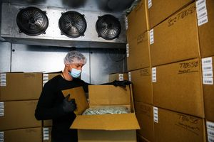 Worker Brad Jones shows off the frozen marijuana in the freezer at Harboside Farms in Salinas, Calif., on Thursday, July 20, 2017.