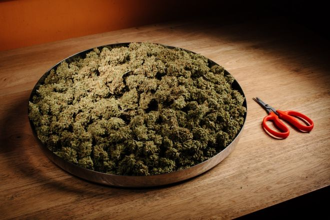 A pound of Super Lemon Haze marijuana by CRAFT Collective photographed on location at their headquarters in Oakland, California, on August 21st, 2017. Photo by Peter Prato