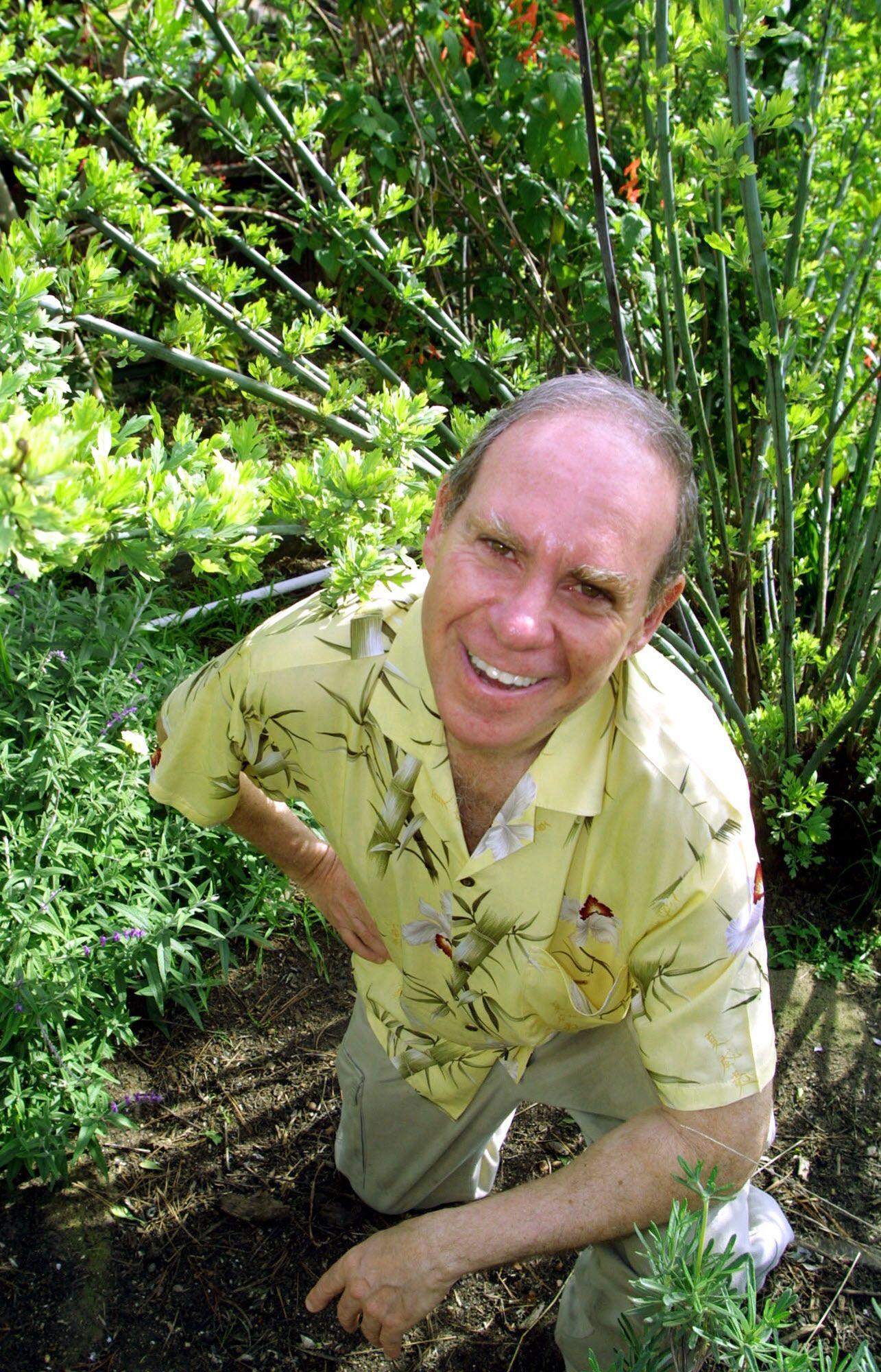 "** FILE ** High Times magazine columnist Ed Rosenthal poses in his home garden in Oakland, Calif., in this Feb. 26, 2002, file photo. Rosenthal, the self-described ""guru of ganja,"" is involved in a court feud with the family of the magazine's founder Tom Forcade over a trust fund consisting of shares in the magazine that Rosenthal suggests could be worth millions of dollars.  (AP Photo/George Nikitin, File)  HOUCHRON CAPTION  (05/11/2003):  Ed Rosenthal, author of the ""Ask Ed"" column in High Times, complains that he has been unfairly cut out of a trust-fund-sharing deal for employees of the magazine."