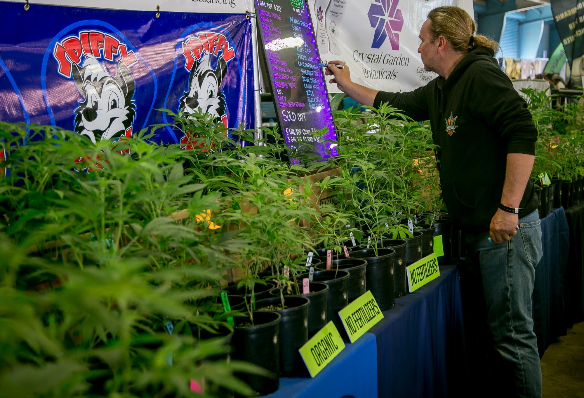 Marijuana plants at a booth at the Cannabis Cup event in the Sonoma County Fairgrounds in Santa Rosa, Calif., are seen on June 3rd, 2017.