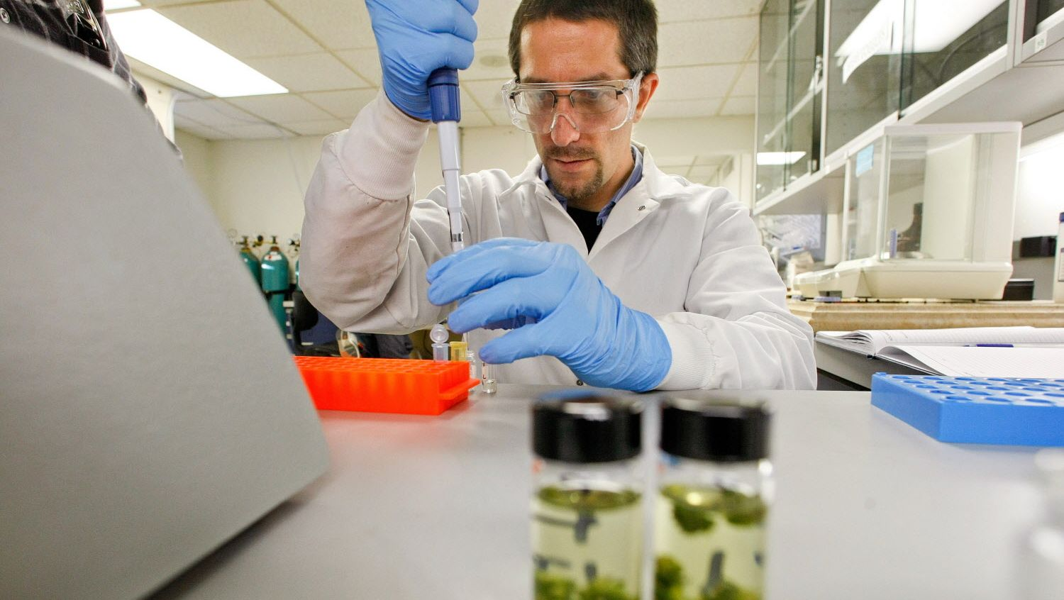 Technician Mark Raber prepares marijuana samples to be analyzed for potency and purity at the Werc Shop on December 16, 2011. (Mel Melcon/Los Angeles Times)