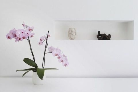 Petal, Flower, Wall, Purple, Flowering plant, Botany, Flowerpot, Terrestrial plant, Interior design, Still life photography,