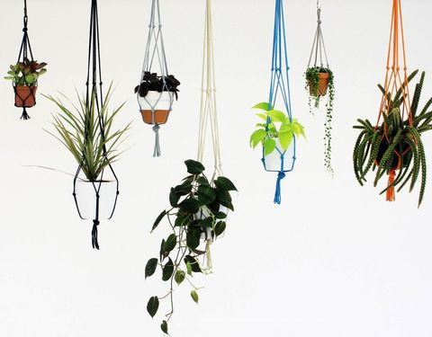 With Knotted Hanging Plant Holders You Can Use A Pot In Diffe Colour To The Holder For Contrasting Look Or Go Simpler Effect