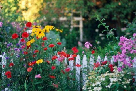 Plant, Petal, Flower, Shrub, Garden, Flowering plant, Botany, Wildflower, Groundcover, Spring,