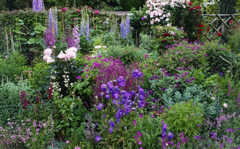 Cottage Garden Flower Border
