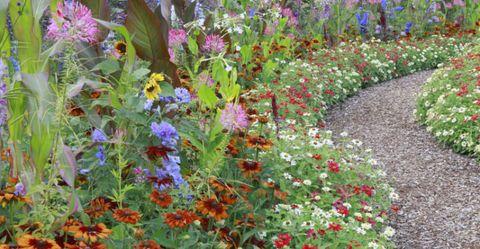 garden-trends-bright-flowers