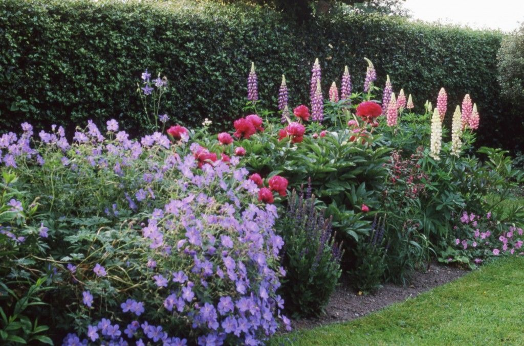 Charming English Country Garden Hedge Boarder