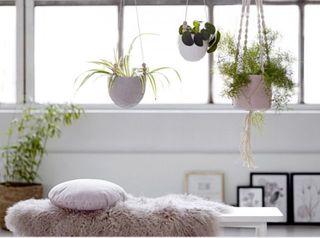 15 Best Indoor Hanging Planters