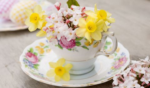 spring-flower-vintage-teacup-narcissus