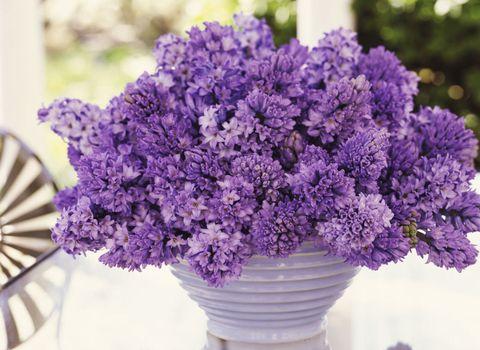 spring-flower-hyacinths