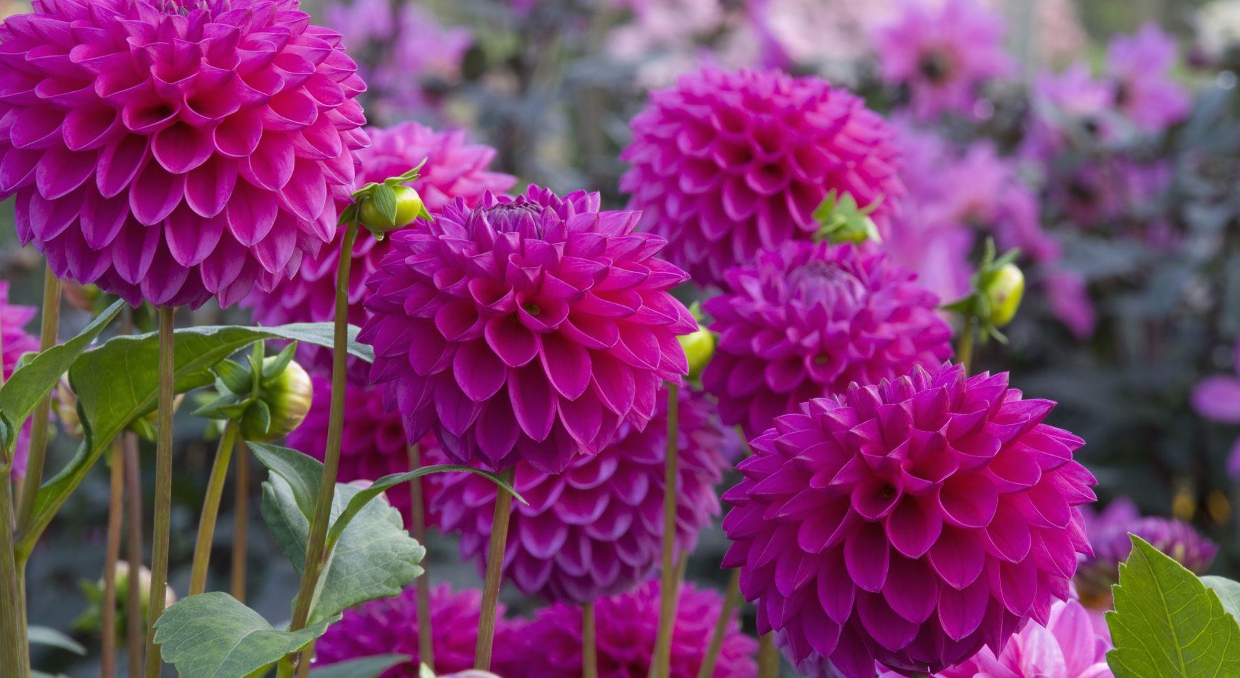 How To Grow Flower Bulbs For Glorious Summer Colour