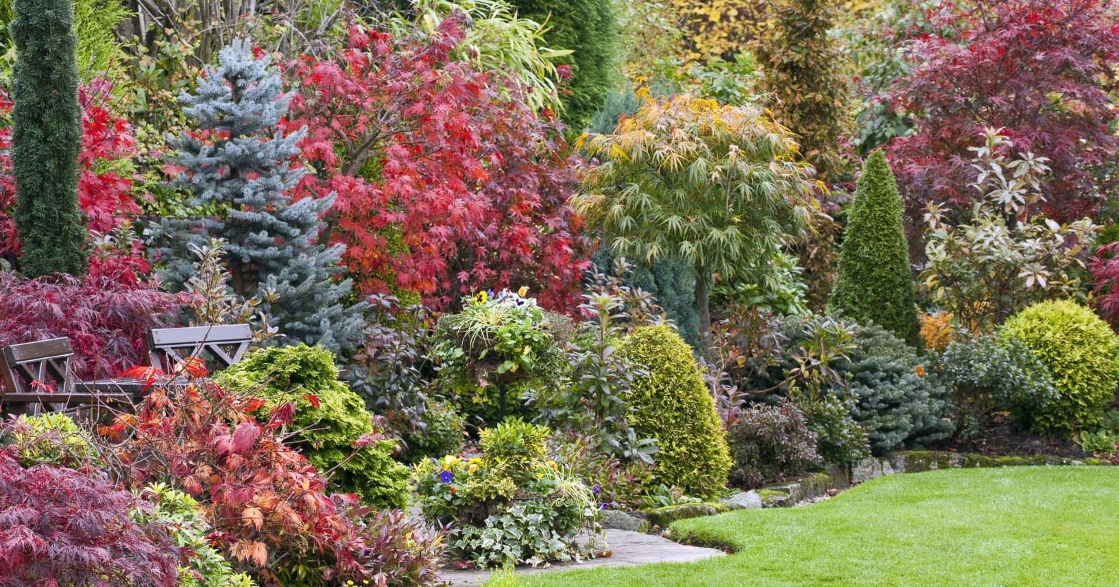 How To Grow The Perfect Tree For Your Garden