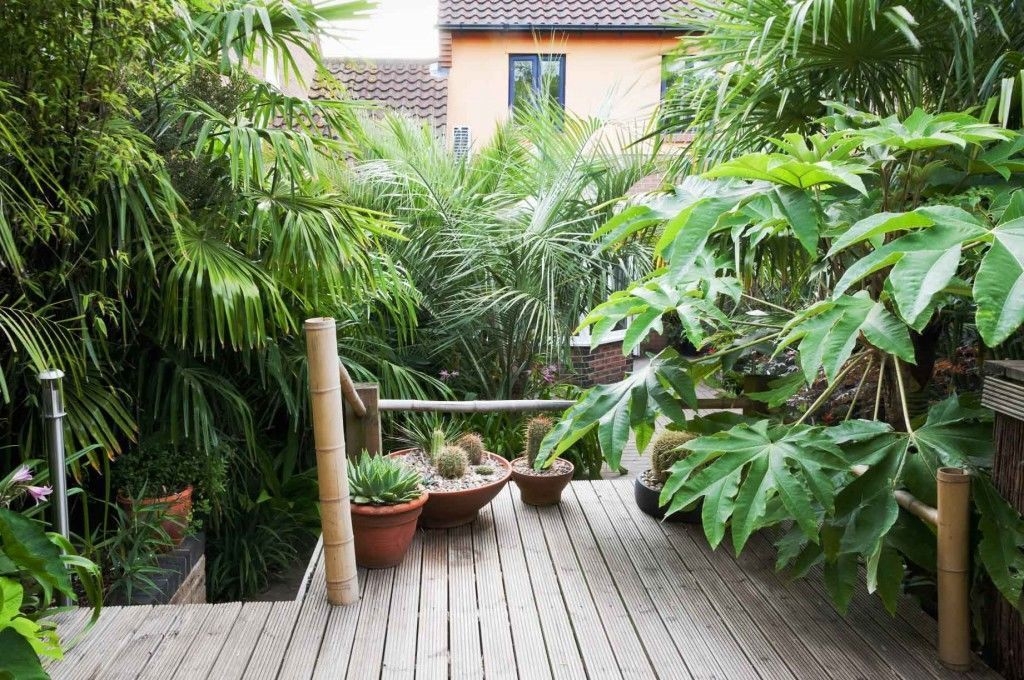 Create The Perfect Tropical Backdrop In Your Garden.
