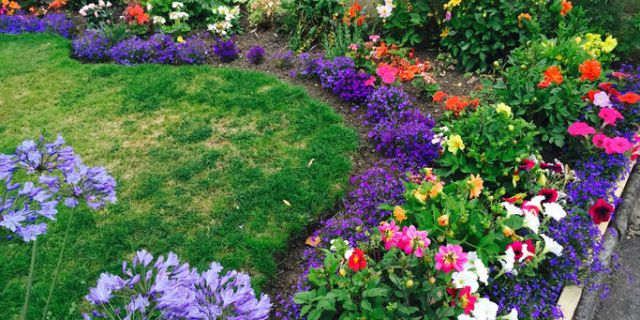 Flower Bed In Garden
