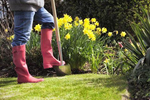 Gardening, using spade in a garden