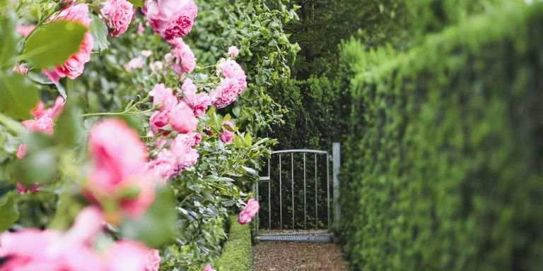 Planting a hedge in your garden: what to avoid and what to try