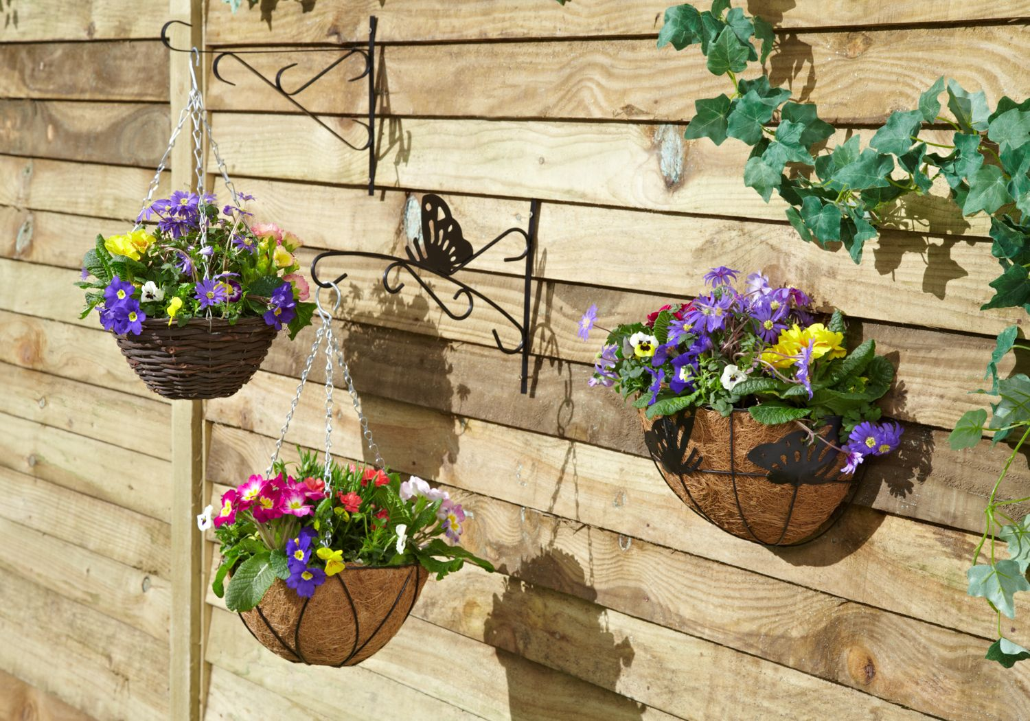 Hanging baskets: add colour to your garden, tips from David Domoney