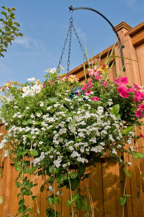 Hanging Baskets Add Colour To Your Garden Tips From