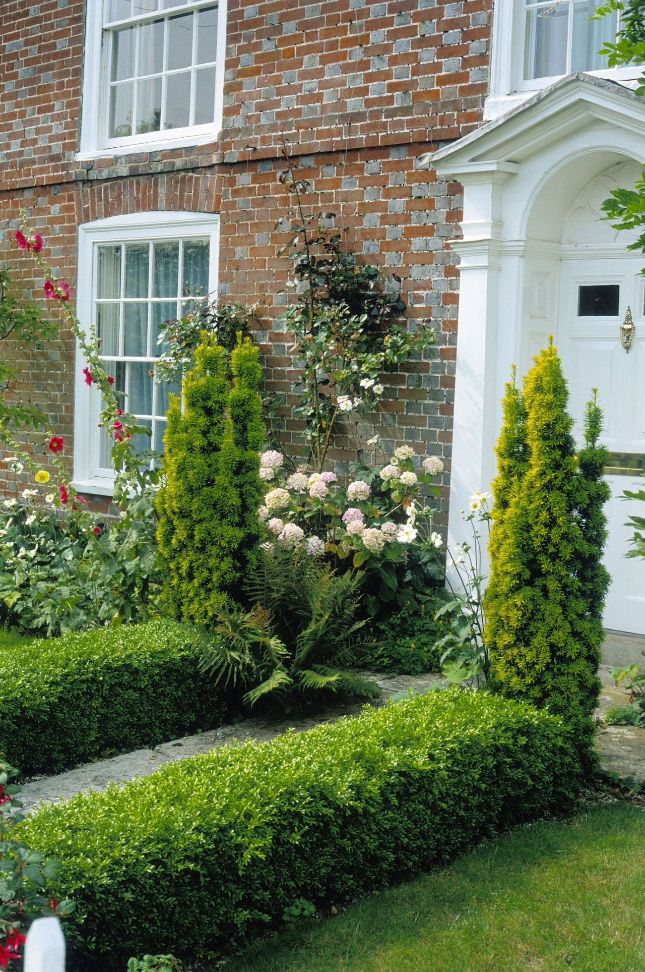 Path Edged With Small Box (Buxus) Hedge Leading To House Front, Front Garden.  Getty ImagesJanet Johnson