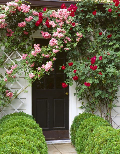 cute plants and shrubs for front of house. Rosa Will Scarlet and Old Blush climbing over cottage house front Front Garden Design Ideas  Kerb Appeal