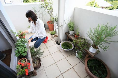 Image result for balcony gardening