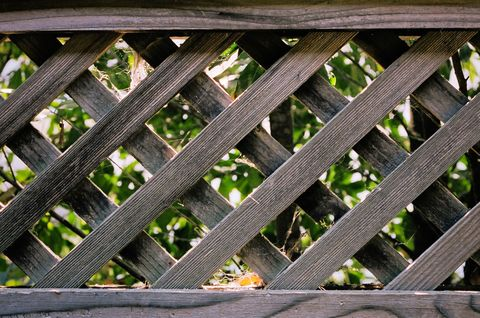 Guide to fencing: hedges, walls, trellis, panels
