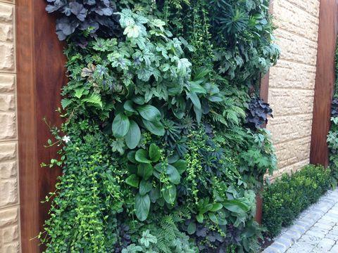 Vertical, living and green walls in a garden