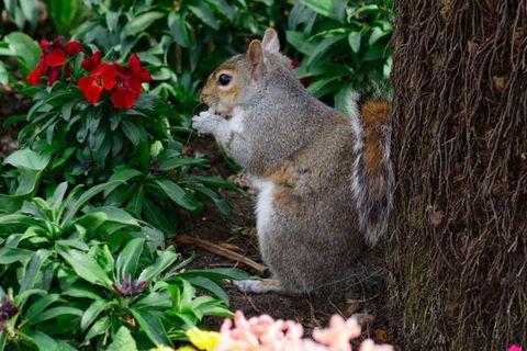 Close-Up Of Squirrel Sitting In Garden