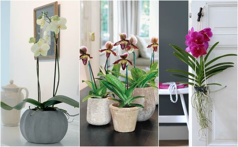 How To Care For Your Orchids Maintenance Tips And What Not To Do
