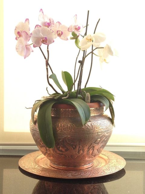 Potted plant - orchid - at home