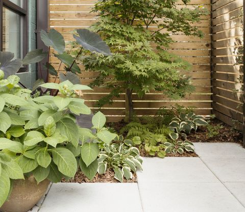 Low Maintenance Garden Design Ideas - Tips, Tricks and Advice