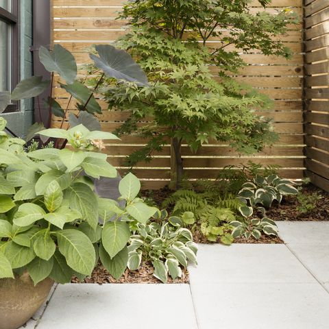 Low Maintenance Garden Ideas Design