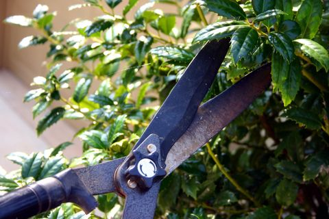 Bush Pruning - Clippers pruning bushes