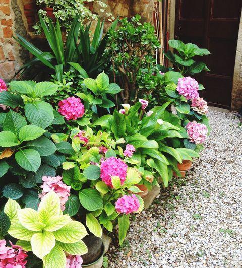Cottage Garden The Wow Factor, Ideas For A Cottage Garden Border