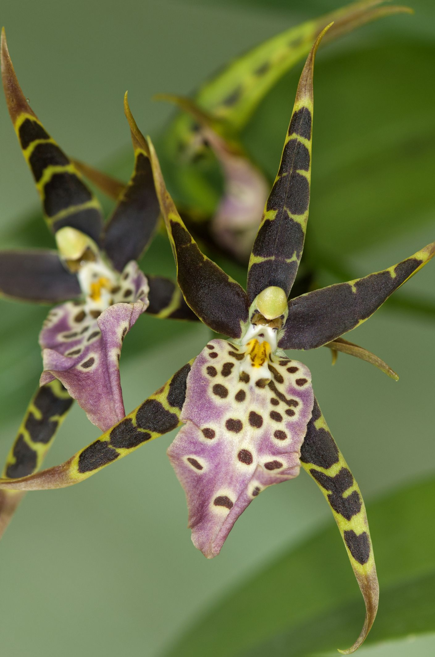 14 Fascinating Facts About Exotic Orchids