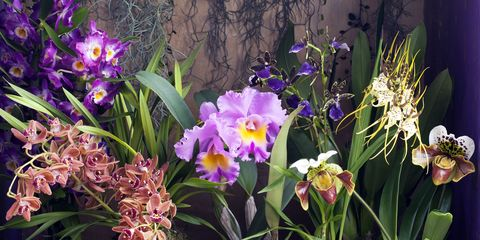 Speciality orchids - Brassia, Cattleya, Dendrobium, Paphiopedilum, Zygopetalum. Photographer:  Erik van Lokven. Stylist:  Elize Eveleens